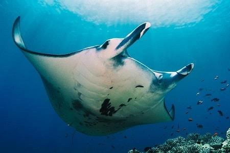 Сделайте рассылку с хештегом SaveOurOceans