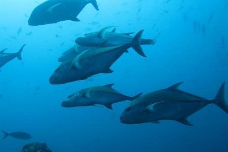 Займитесь очисткой океанов вместе с Conservation International